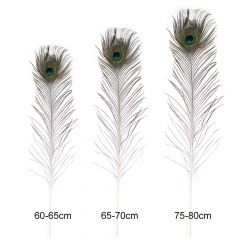 Peacock feathers 60-80cm - 5pcs