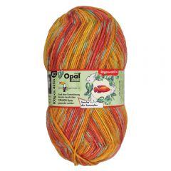 Opal Regenwald XIV 6-ply 8x150g - 9637